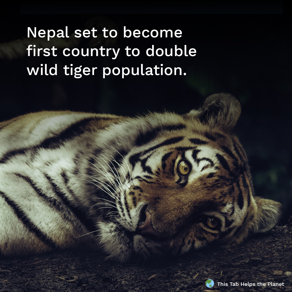 Nepal nearly doubles its wild tiger population - This Tab